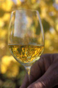 Sur la Route des Vins d'Alsace stockfood.fr