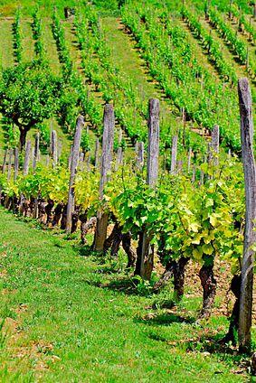 Les Vins du Bugey