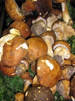 Recettes de cèpes © Asfaux Patrick - AFTouch-cuisine.com 2