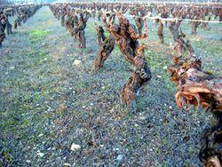 Terroirs de France vigne du pays nantais