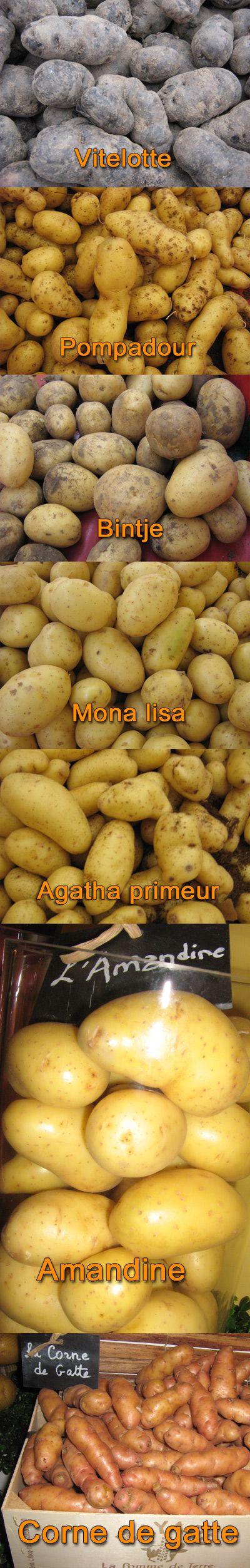 http://www.aftouch-cuisine.com/images/news/pommes-de-terre.jpg
