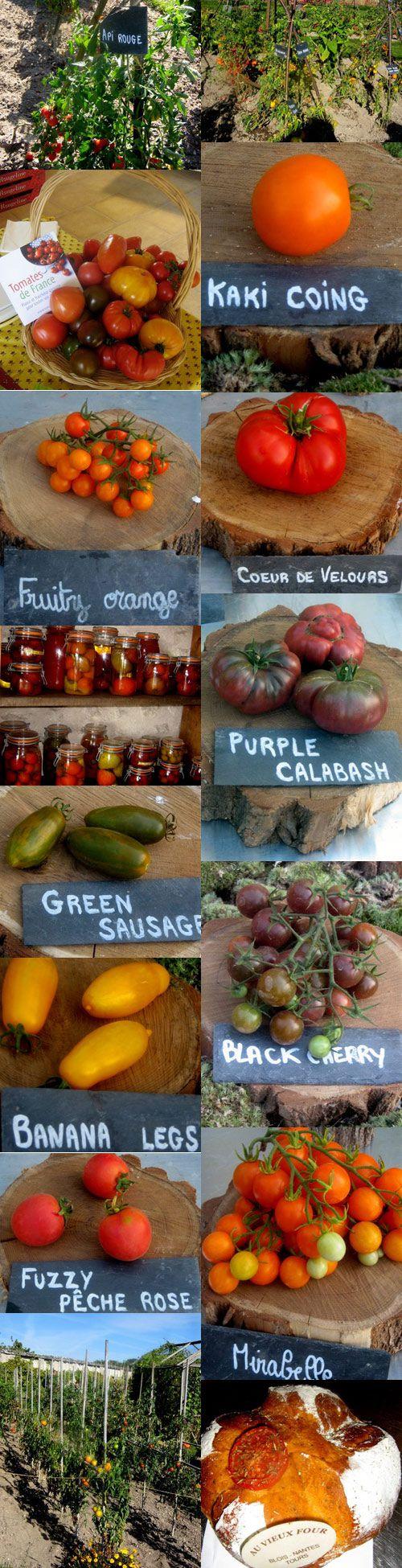 paradis de la tomates