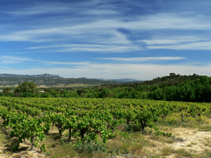 AOC Coteaux du Languedoc