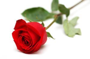 Confit de Pétales de Roses de Provins