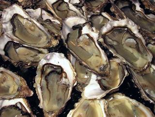 Vendée-Atlantic Oysters