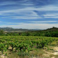 coteaux du languedoc wines