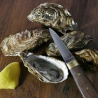oyster marenne d'oléron