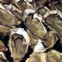 huîtres de bretagne