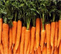 rate de carottes