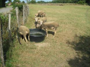 Charlotte agneau et aubergines