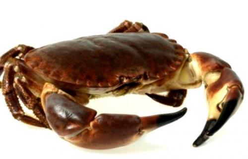 Crème de concombres et crabe