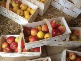 Douillons de pommes à la picarde