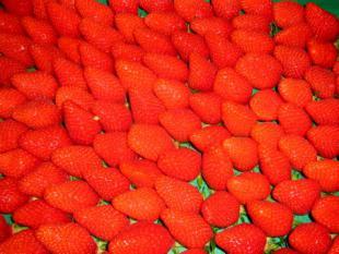Gateau aérien aux fruits rouges
