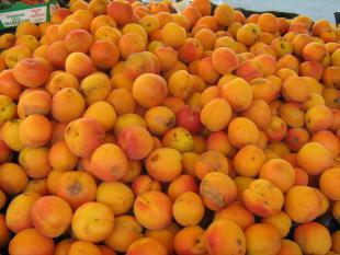 Mousse d'abricots