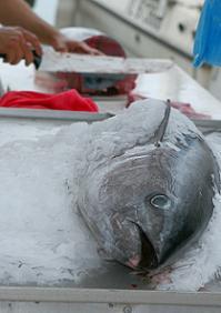 Tuna à la Provençale