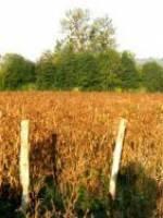 Les Haricots de Soissons