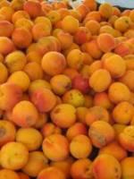 Mousse d\'abricots