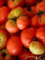 Sorbet tomates basilic