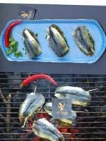 Sardines comme � juan-les-pins